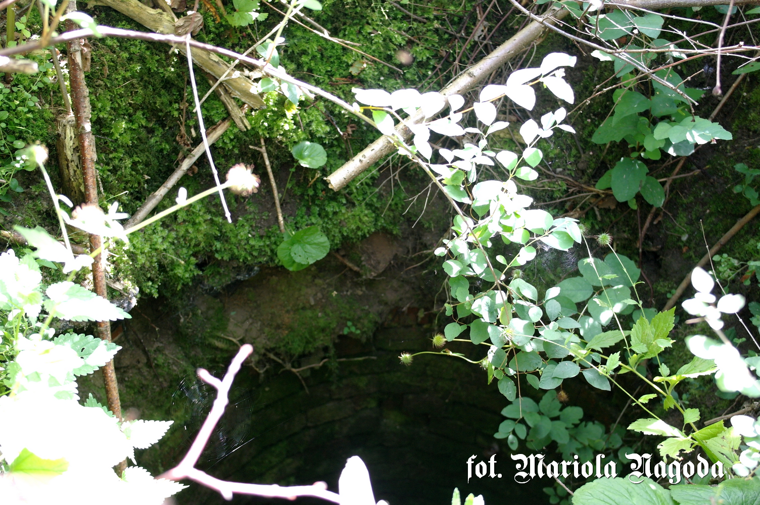 Klucznik- studnia k.Plebani 1a