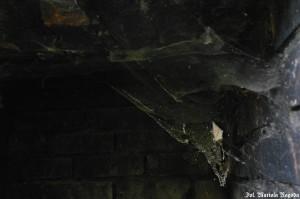 IS_Folwark Leśnik, dom mieszkalny i pajęczyna