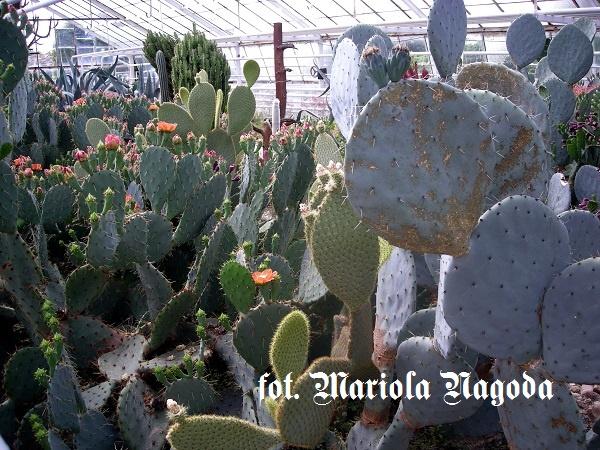 IS_12. Ogród botaniczny arobretum- Pomologia 5